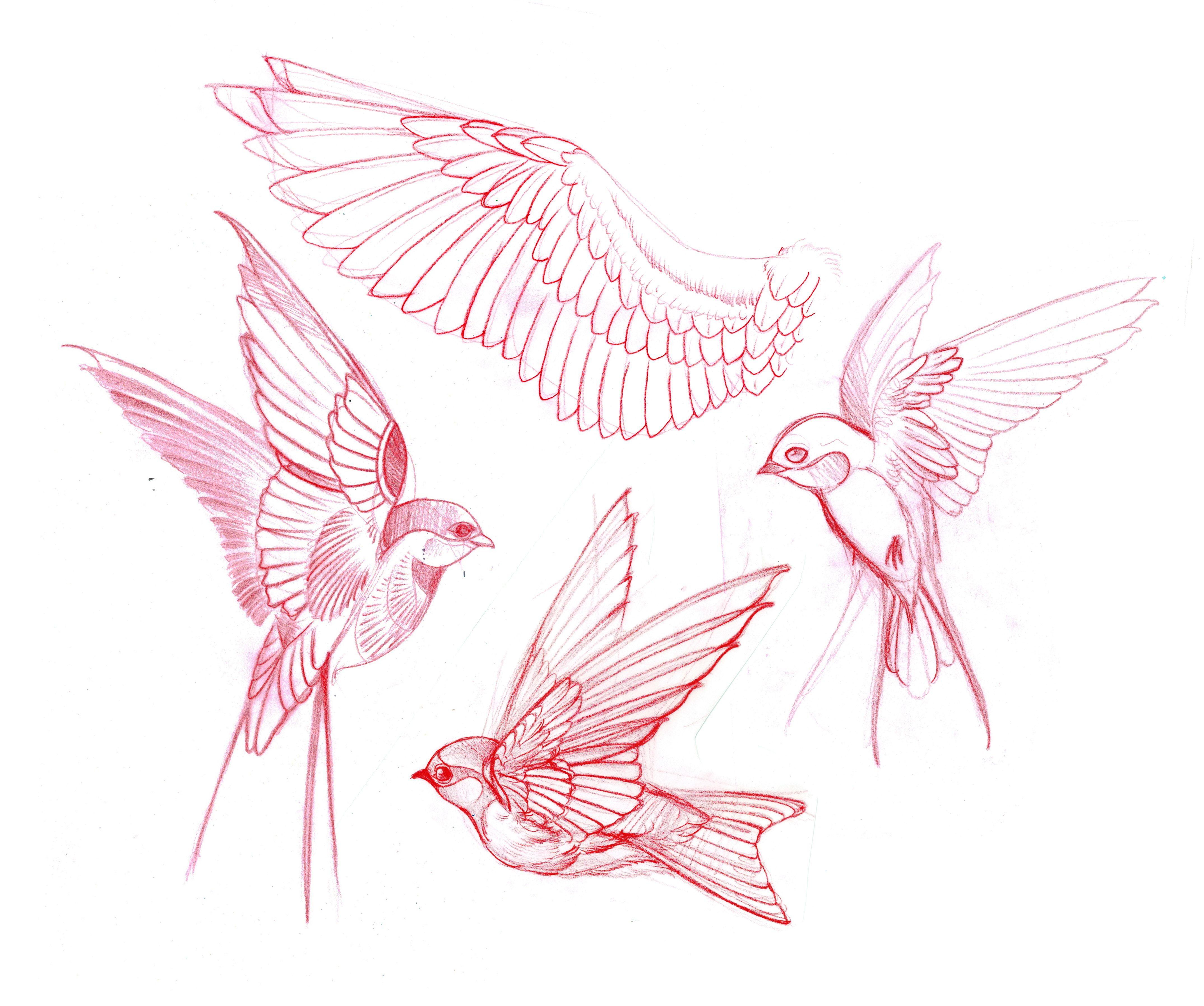 Bird Tattoo Sketch Design Sketch Tattoo Design Birds Tattoo Tattoo Sketches