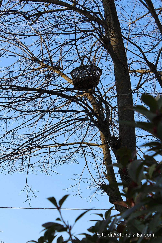 Cesto sull'albero  - sabato 3 gennaio 2015 - Canon EOS 1200D