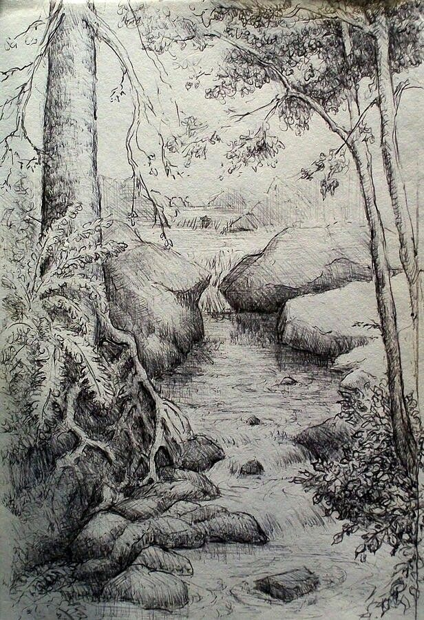 Brook drawn in the forest  brook drawn forest is part of Pencil drawings -