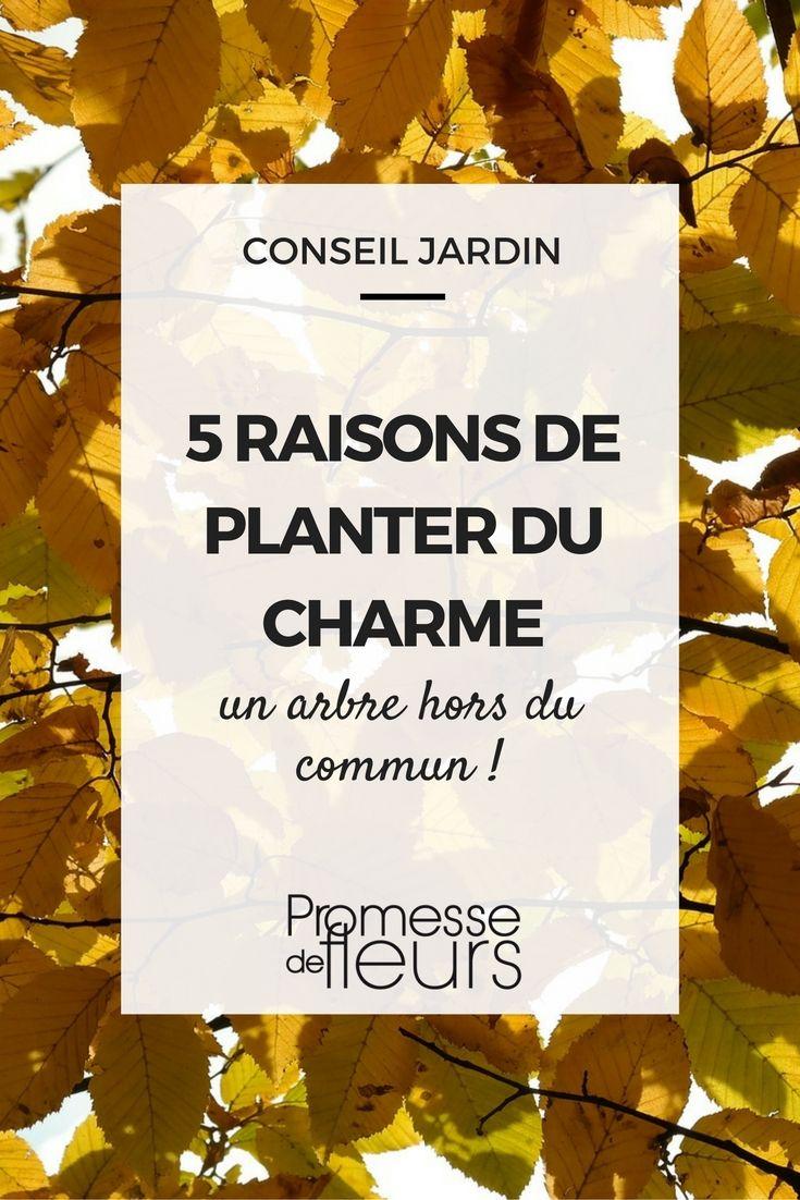5 raisons de planter le charme un arbre hors du commun conseils et astuces jardins arbre - Haie de jardin qui pousse vite ...