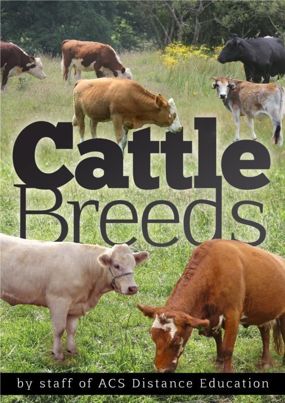 Cattle Breeds Pdf Ebook Raising Farm Animals Cattle Breeds