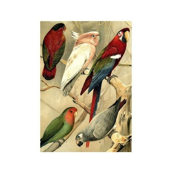 The Dybdahl Co. Home Parrots Illustrated Encyclopedia Print ($72 ...