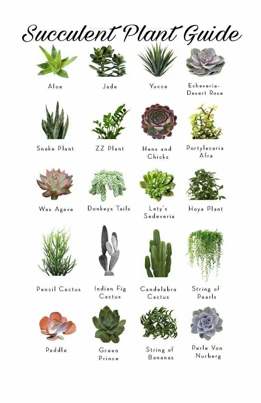 Pin by Carol Long on Garden  Pinterest  Cactus Succulents and Plants