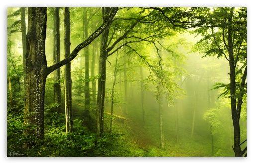 Download Beautiful Green Forest Hd Wallpaper Naturbilder