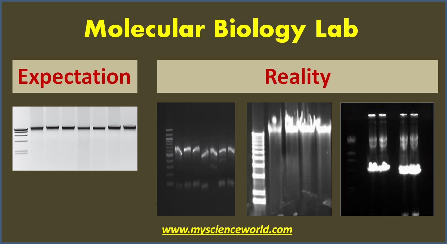 Molecular biology humour. I wish my work at Ag Canada hadn