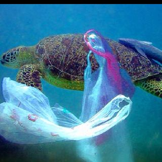 Sea turtles and other marine creatures mistake plastics and other garbage as food (such as jellyfish) and ingest it. This mistake causes blockages within their digestive system and eventual death.