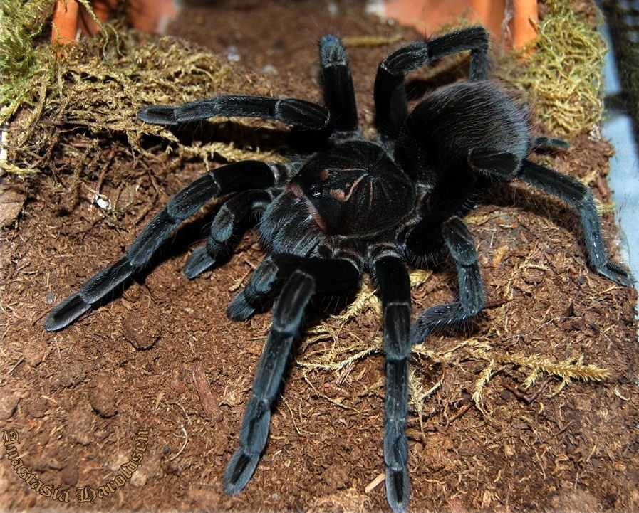 ba8d976c44a5d1ecfc2f0726e0e2e8c8 - How To Get Rid Of Tarantulas In My House