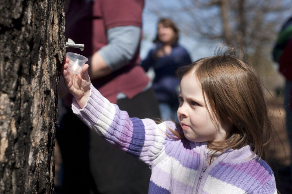 Maple-syrup class offers sweet, sticky schooling