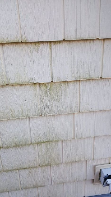 Clean Green Mold Off Vinyl Siding With Out A Pressure