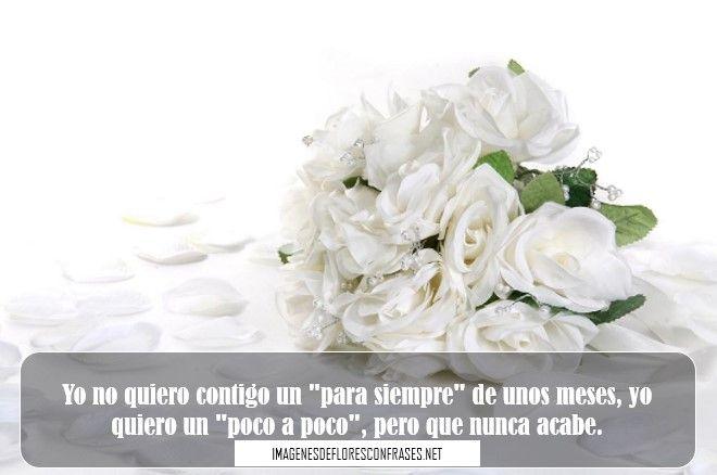 Imagen De Rosas Blancas Con Frases De Amor Imagenes De Flores Con