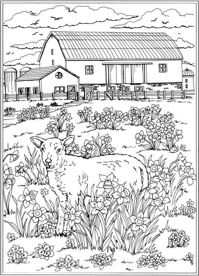 Farm Scene With Lamb In A Field Spring Coloring Pages Farm
