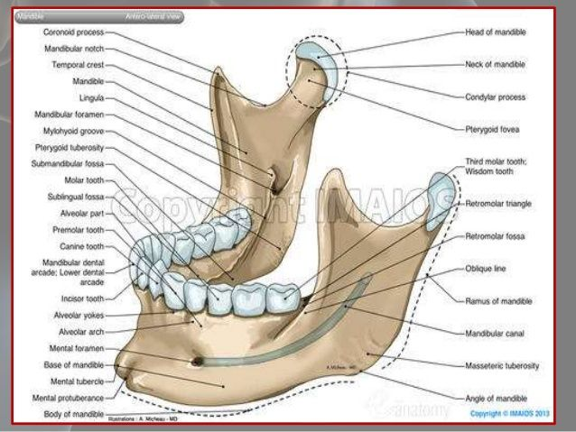 Anatomical considerations for dental implants | Medical ...