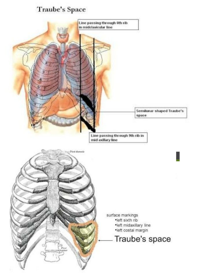 Traubes Space Spleen Fundus Of Stomach Oylesine Pinterest