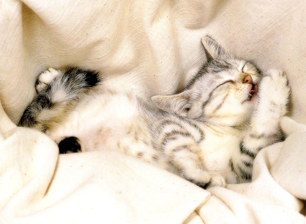 Pin By Christianne On Catscatscatscats Sleeping Kitten Kittens Funny Kittens Cutest