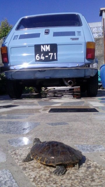 MY FIAT 126 @ LEÇA DA PALMEIRA HOME WITH TURTLE