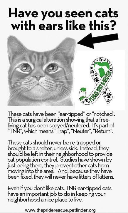 How To Recognize A Spayed Or Neutered Feral Cat Feral Cats Cats Tnr Cats