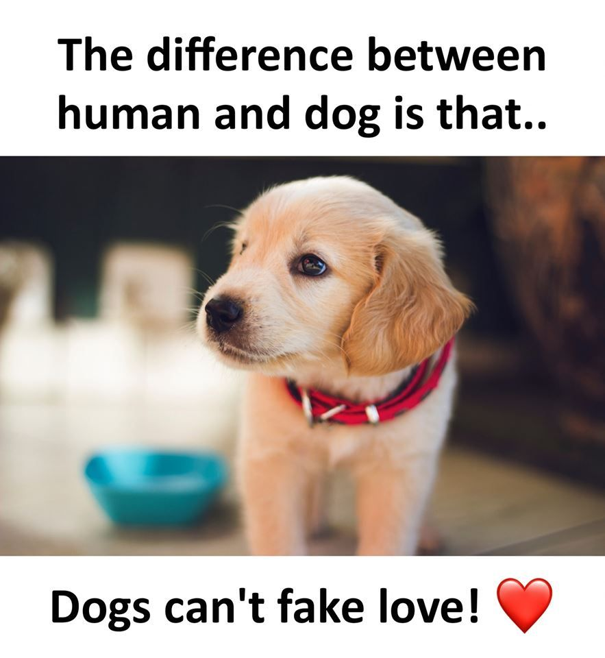 Funny Dog Memes Funny Dog Memes International Dog Day Animal Lover Quotes