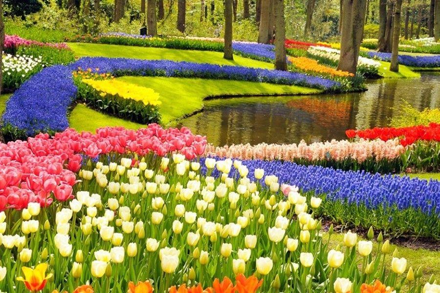 ba8fb72c1a5a42b8a58beab2d3dad7e3 - Tours From Amsterdam To Keukenhof Gardens