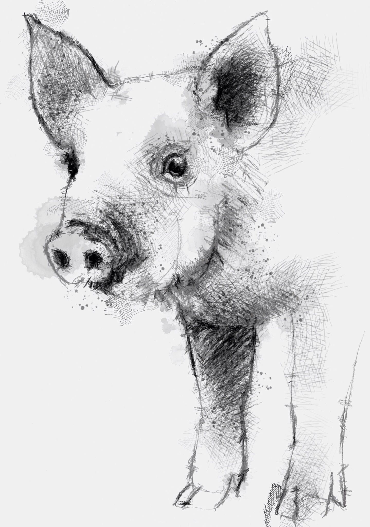 One of my sketch a day drawings piglet domestic drawing pig sketch
