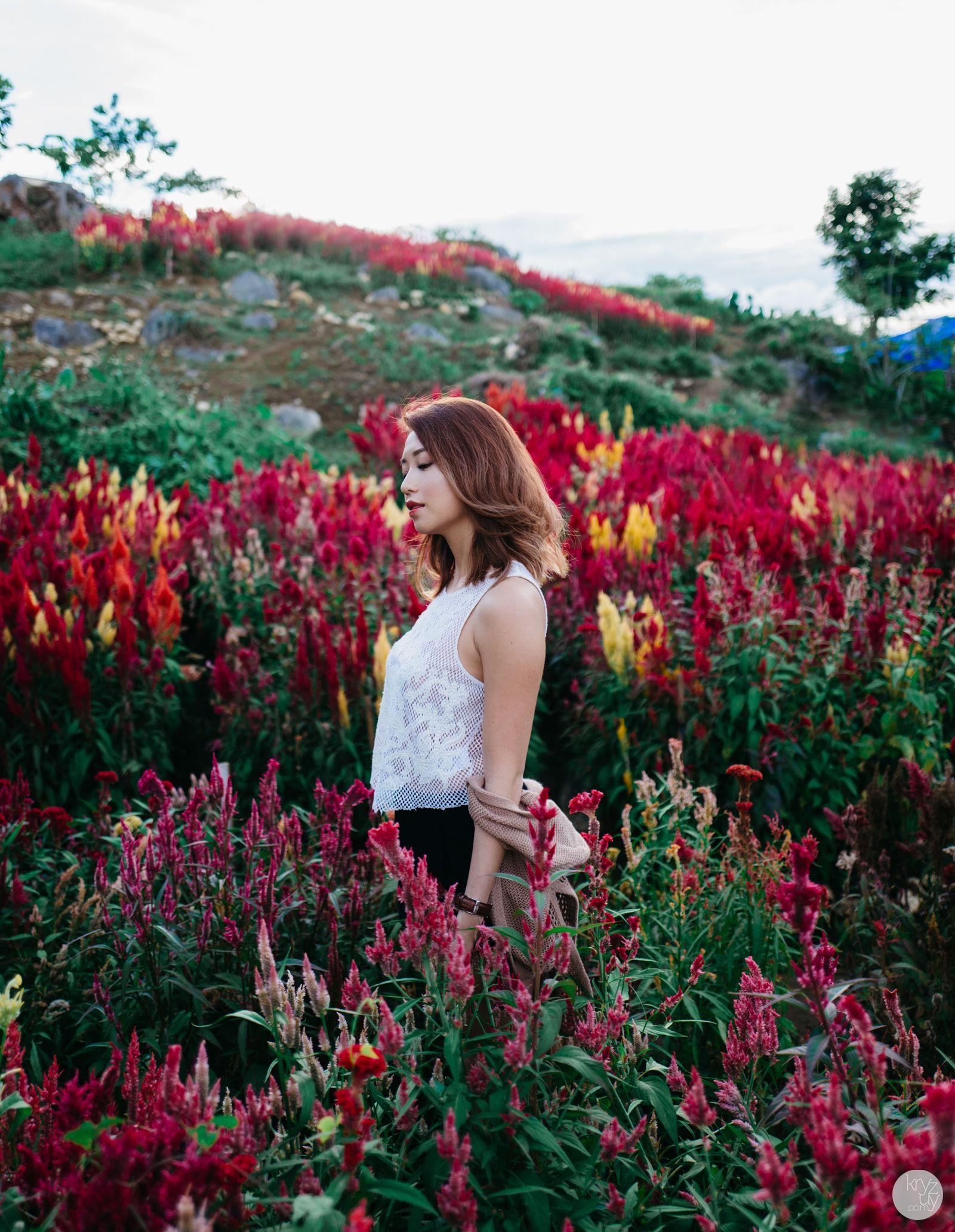 Sirao Flower Garden Flower garden, Gardening photography