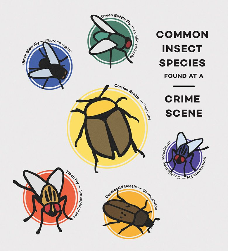 Smell That It S Forensic Entomology At The Body Farm Forensic Science Body Farm Forensic Science Career