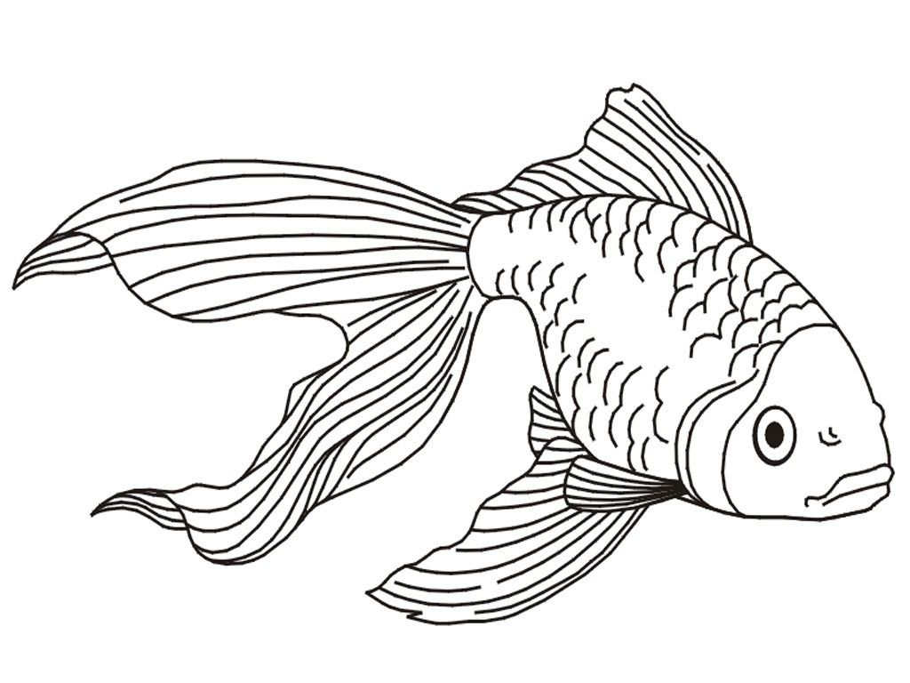 Printable Goldfish Coloring Pages  Fish coloring page, Animal