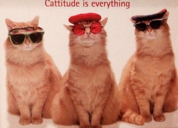 catttude