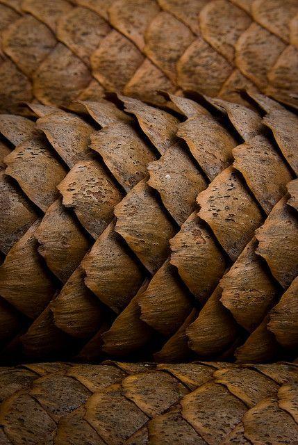 Pining For Home 302 365 Macrofotografie Textuur Texturen