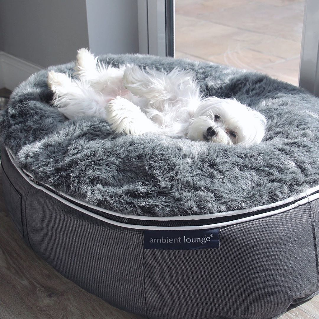 Ambient Dog Beds The Best Dog Beds! in 2020 Cool dog