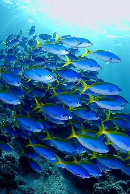Pretty Blue!