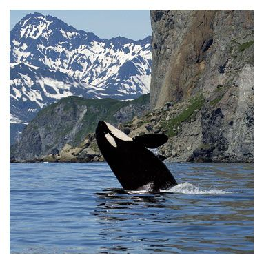 orca orca orca orca