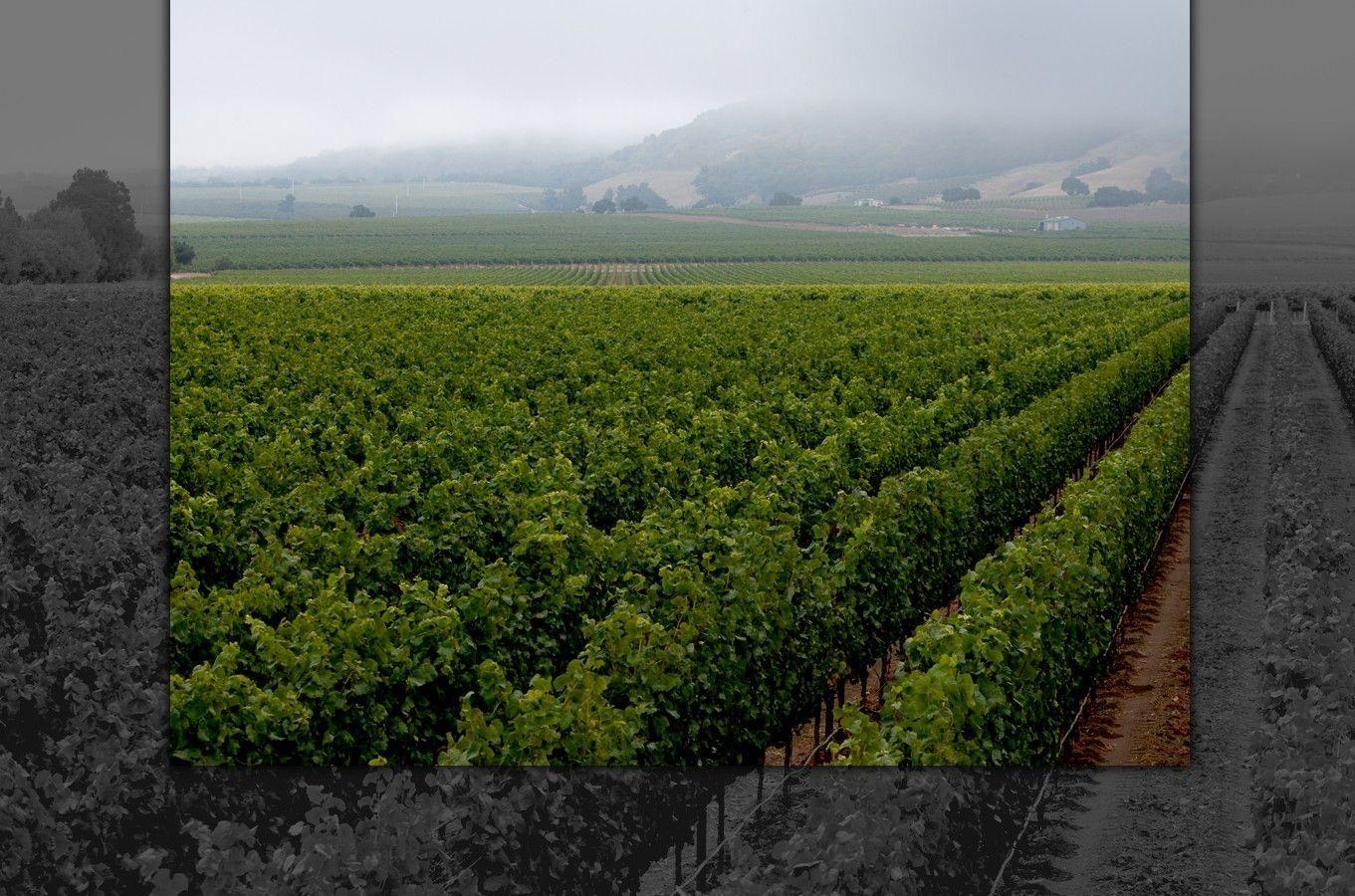 Chardonnay made wine spectators top 100 of 2011