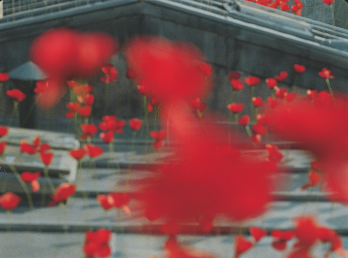 poppies on paris's roof