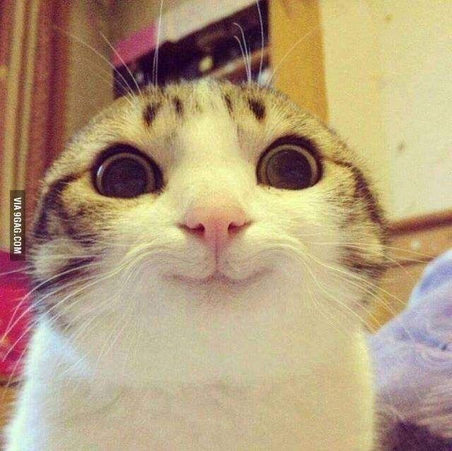 Gato Sorrindo Cute Animal Memes Funny Animal Jokes Funny Cat Pictures