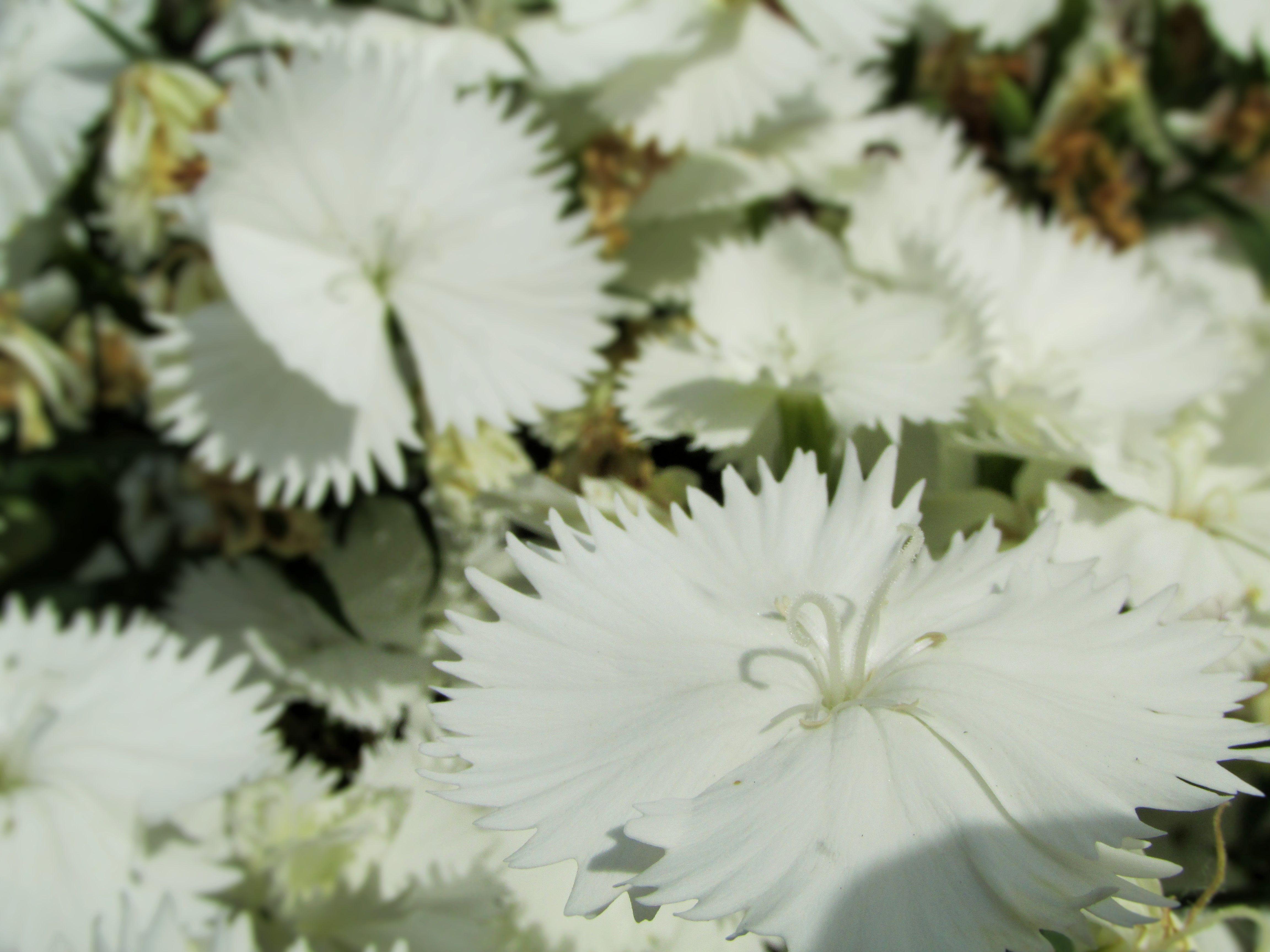 White Flower Flowers Pinterest Flowers