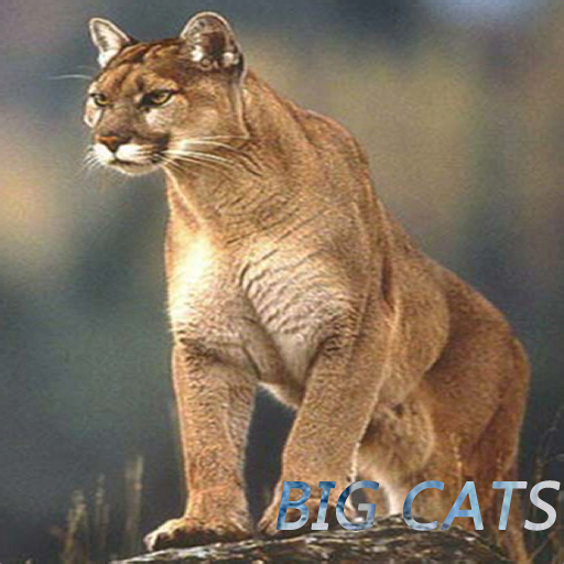 The domain name is for sale Mountain lion