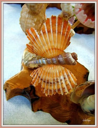 Beach crafts sea sells and drift wood sea shell for Animals made out of seashells