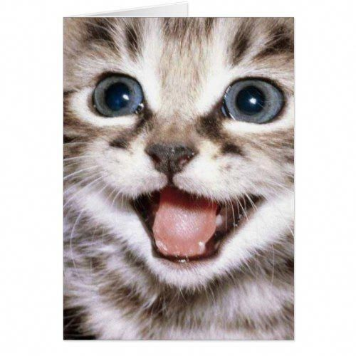 You're The Cats Meow! Funny Cat Card pomeranianblack