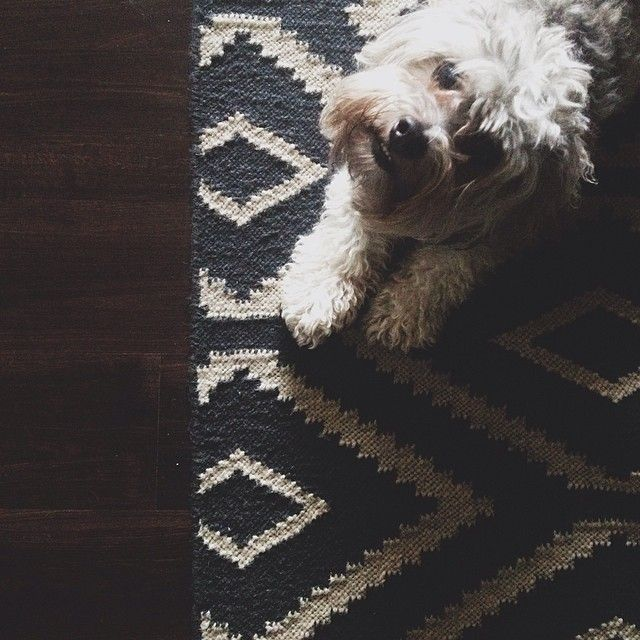 Cute Pets West Elm The Perfect Combination Pets Cute Animals Animal Lover