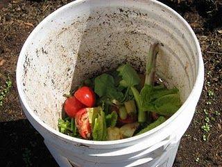 compost tea in a bucket