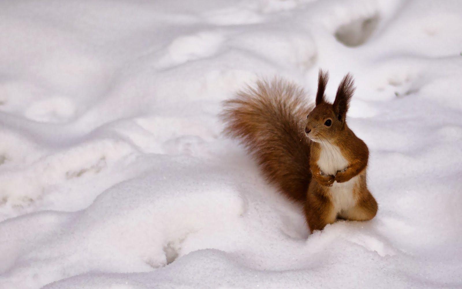 Eichhornchen Katze Im Schnee Eichhornchen Bilder