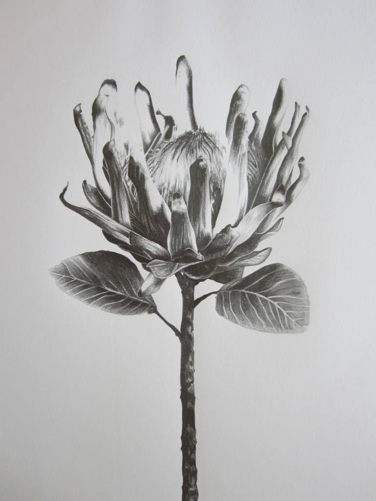 хрупкий цветок рисунок