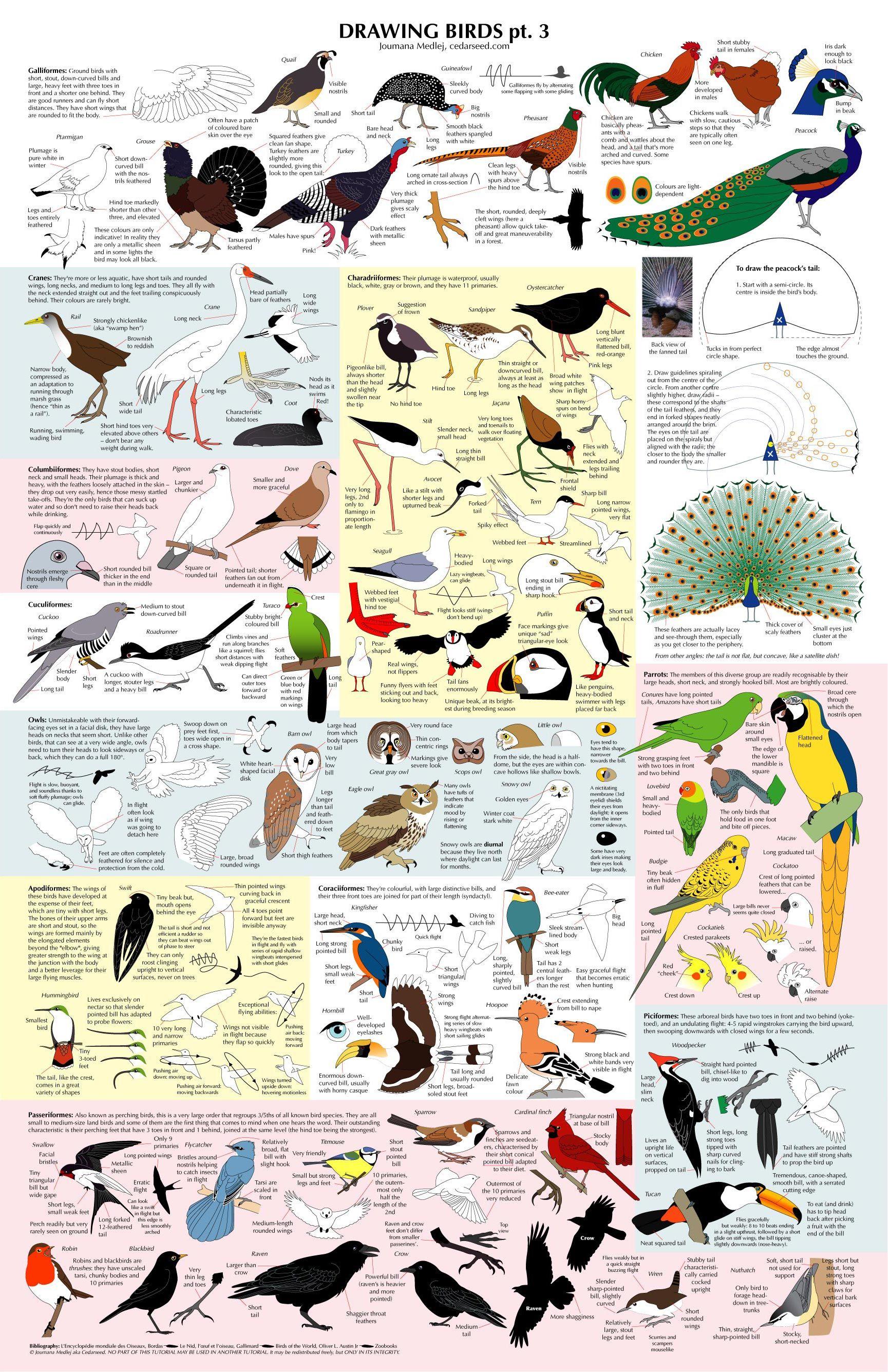 Pássaros pássaros pássaros