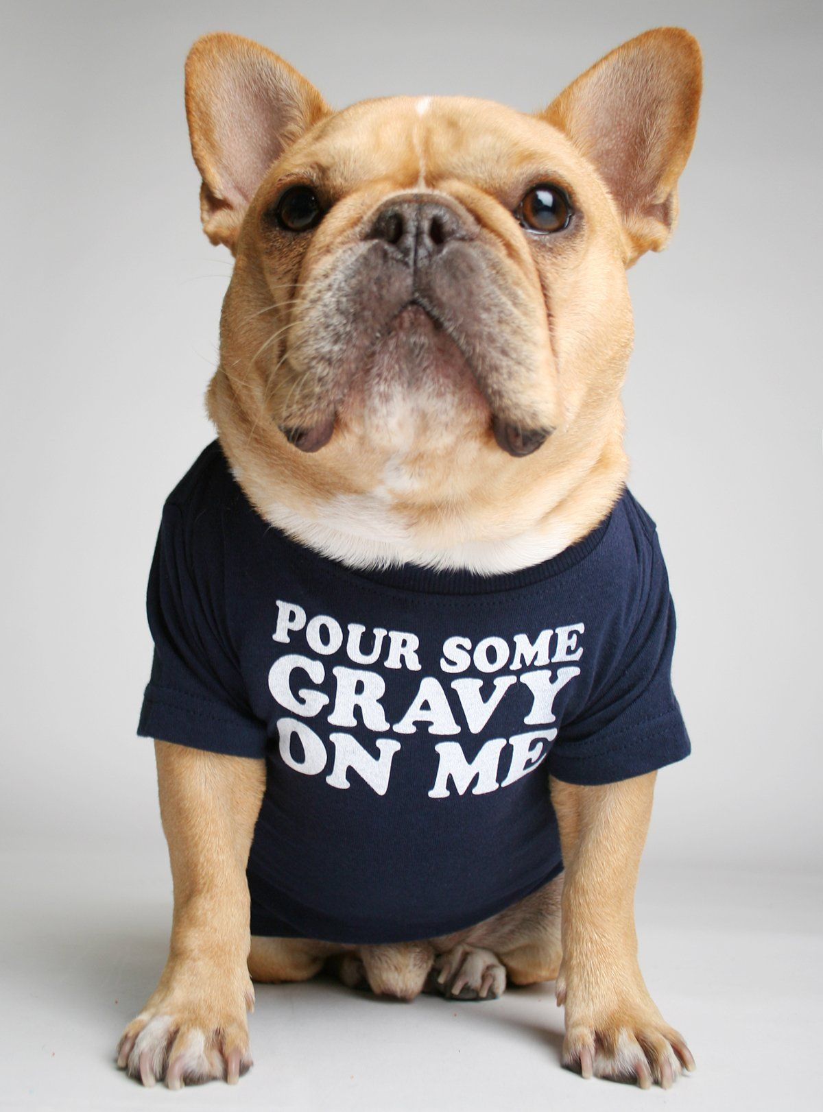 French Bulldog wearing a POUR SOME GRAVY ON ME DOG TEE