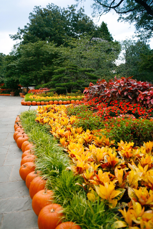 Exceptionnel Dallas Arboretum, Autumn At The Arboretum, Fall, Pumpkins, Garden