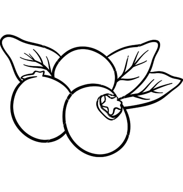 Blueberry Fruits For Coloring Book Coloring Page Best Place To Color Coloring Pages Coloring Books Blueberry Fruit