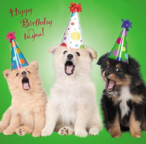 Dog Puppy Birthday Greetings Card