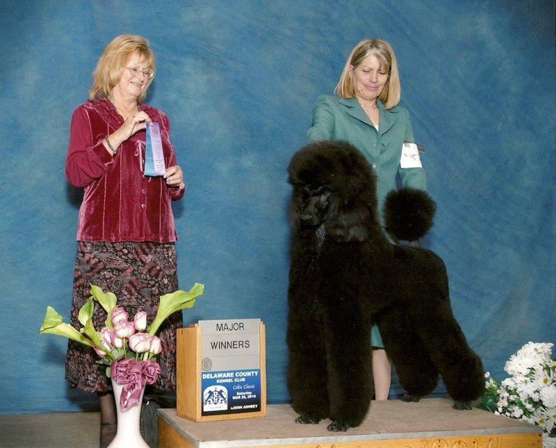 Natalie S Poodles Is A Responsible Breeder Of Standard Poodles