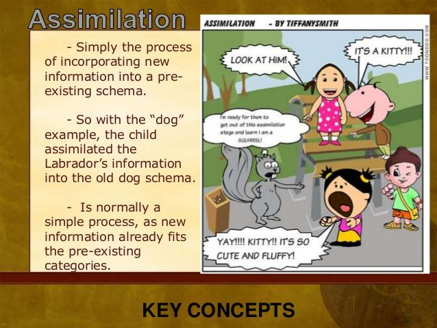 Piaget's Cognitive Development Theory Examples Buscar