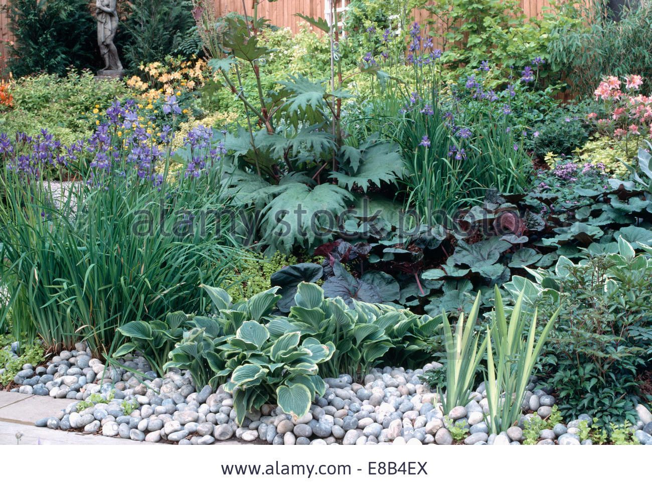 Blue Iris And Hosta Mulched With Pebbles In Well Stocked Garden Stock Photo, Picture And Royalty Free Image. Pic. 74003746